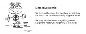 Graceful-Landscape-Helpers_Detective_Beetle